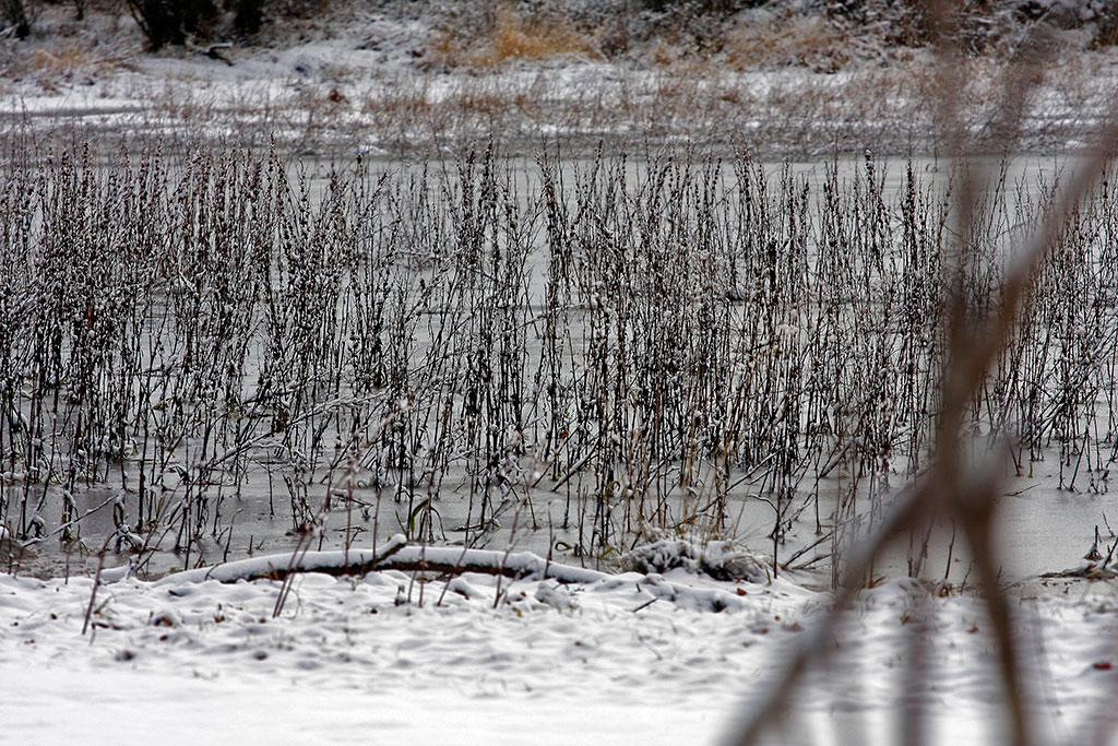 vegetação gelada no lago de sanabria