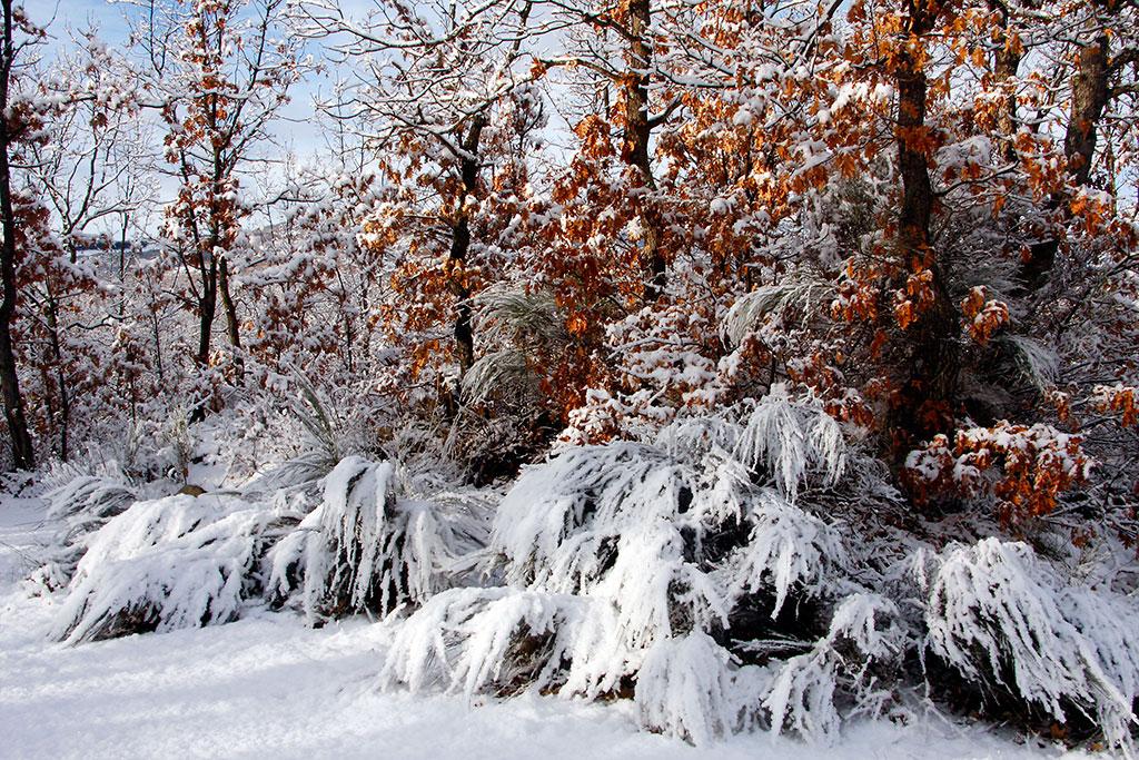 vegetação gelada no rio tera