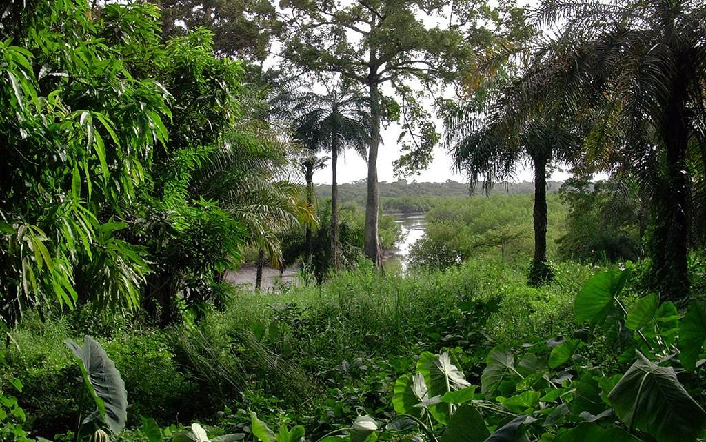Selva Guiné-Bissau