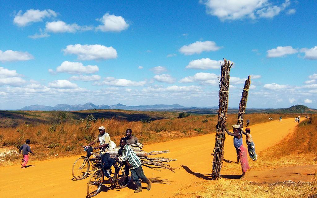 Transporte de Madeira em Moçambique