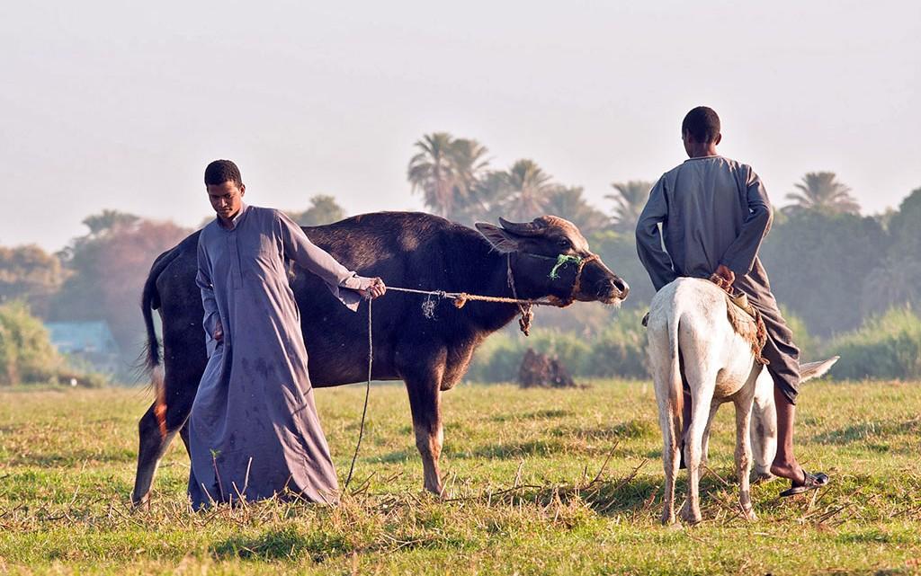 agricultores nubios junto ao nilo