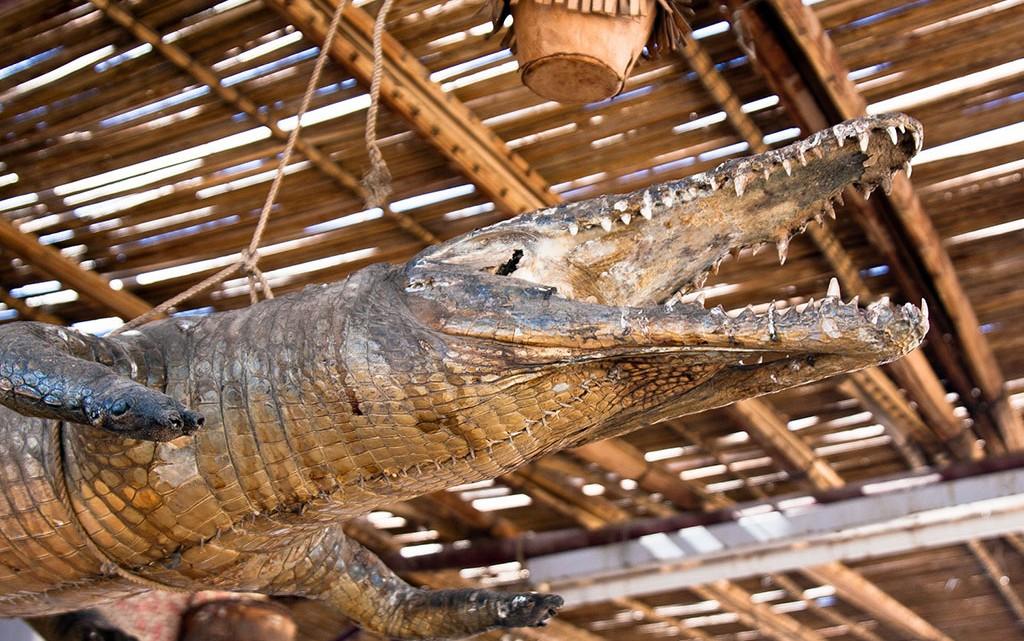 crocodilo embalsamado