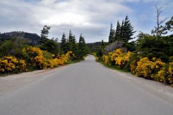 estrada entre vegetação amarela