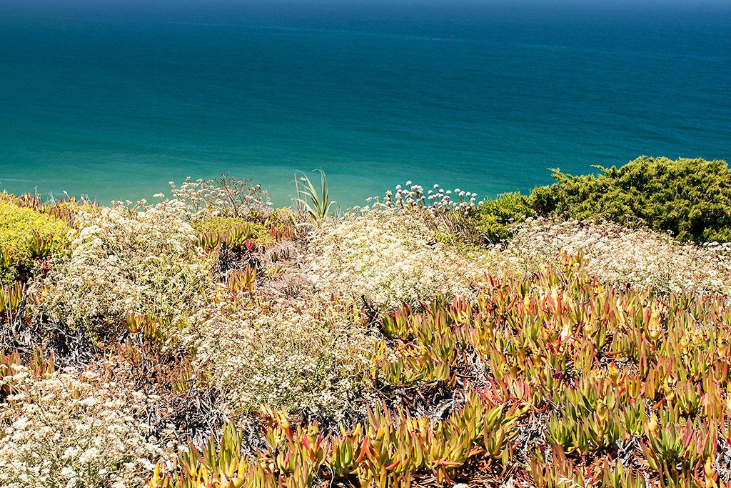 vegetação na arriba do cabo da roca