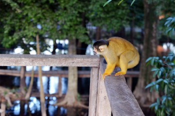 Macaco nas pampas, Rurrenabaque