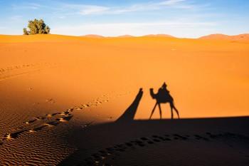 Sombra de camelo em Merzouga