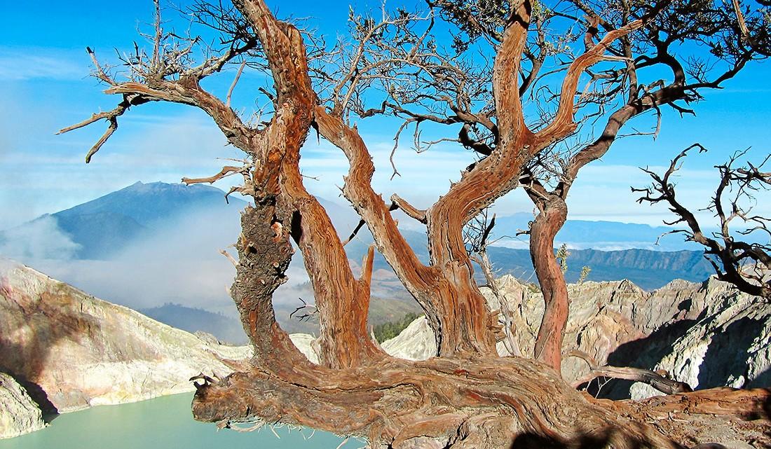 ramos de árvores no topo de Kawah Ijen