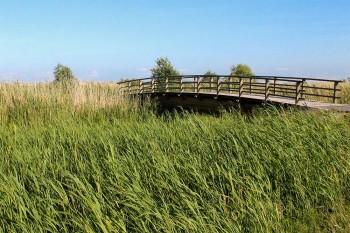 ponte de madeira na ilha de saarema