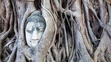 Cabeça de Buda envolto em raízes