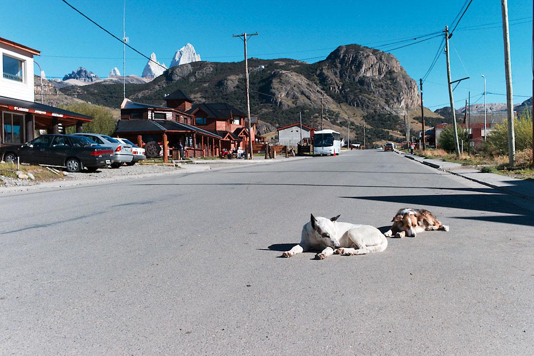 caes e cumes do monte Fitz Roy na rua principal de El Chalten