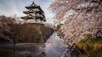 Castelo de Hirosaki junto ao fosso e cerejeiras em flor
