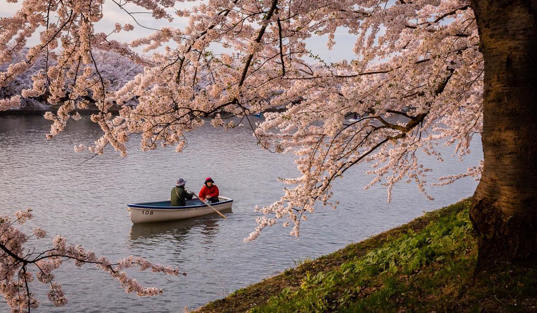 casal que passeia num barco a remos no parque de Hirosaki