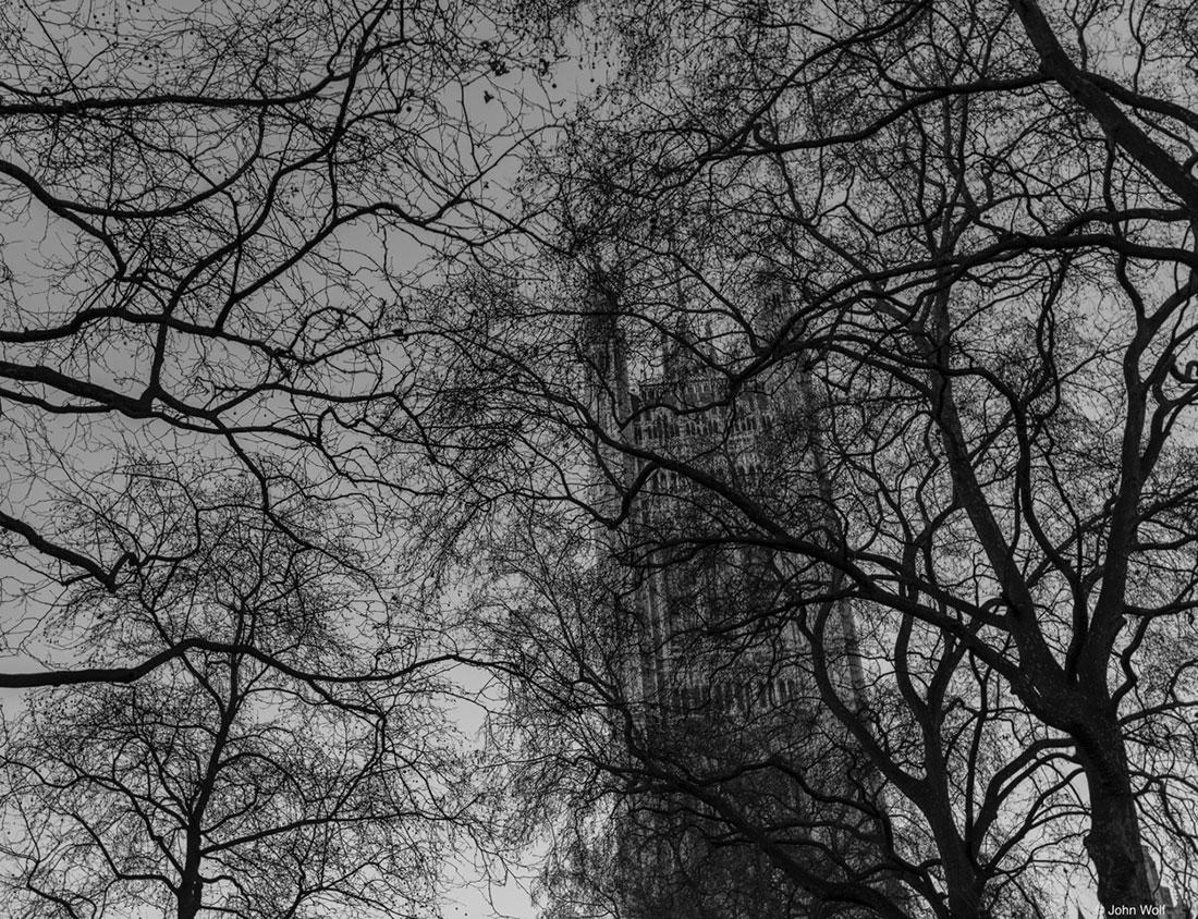 árvores junto ao parlamento e big bem, o símbolo das horas britânicas