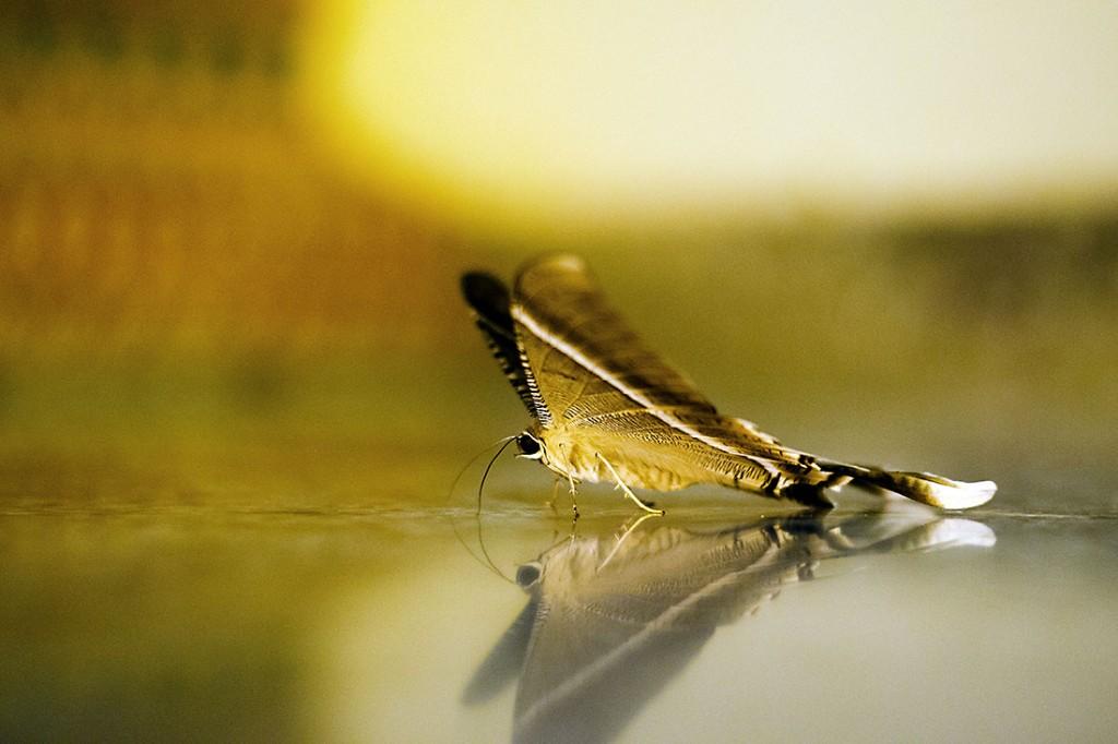 macro de uma borboleta