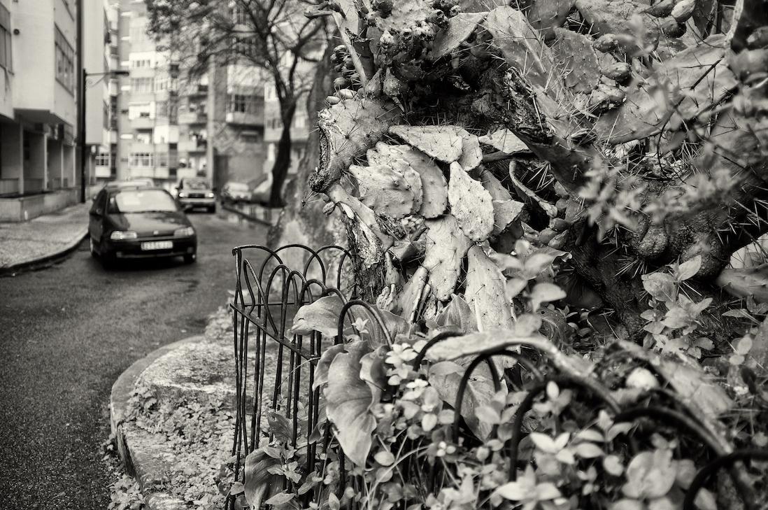 cactos e plantas junto a árvore numa das ruas de Lisboa