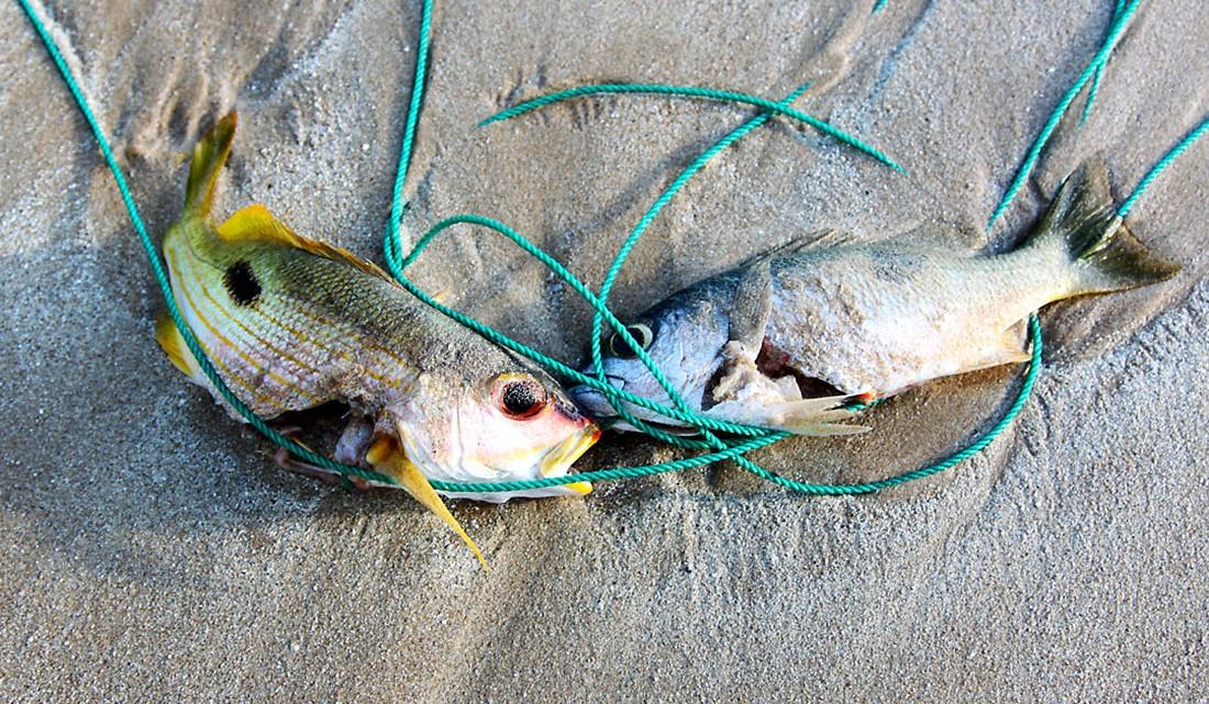 peixes acabados de pescar na ilha de tanahmasa