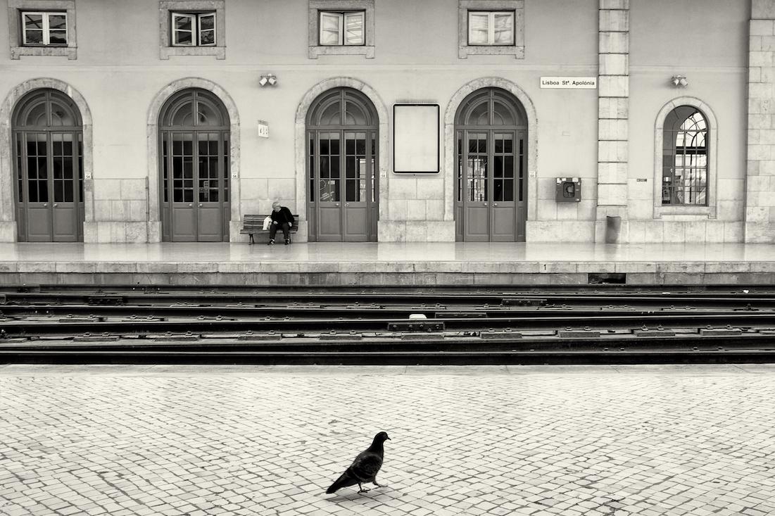 pombo no cais da estação de Santa Apolónia