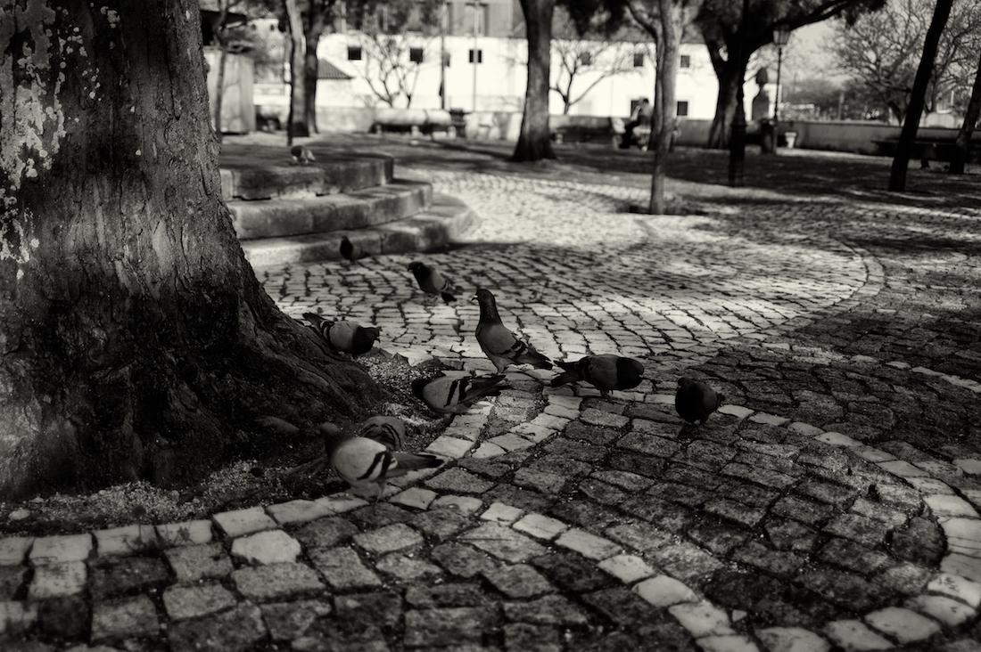 pombos junto a árvore em jardim de Lisboa