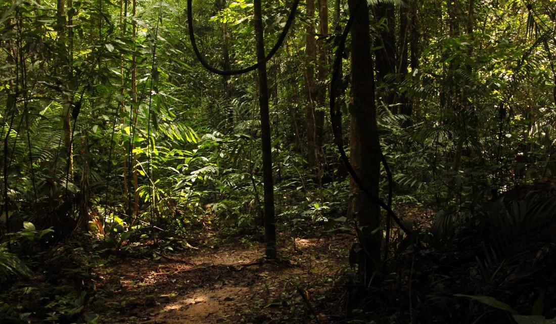 Ambiente de selva em plena caminhada