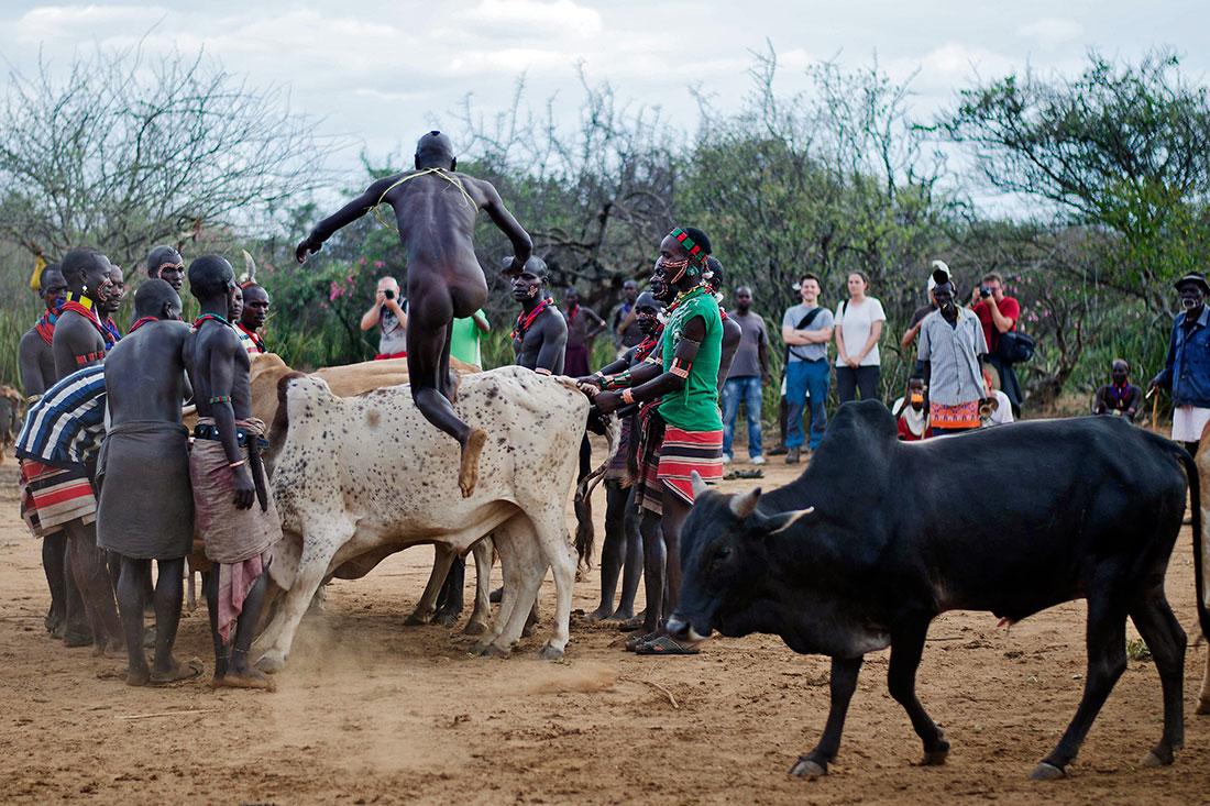 homem a saltar sobre um boi na cerimónia bull jumping no vale de omo