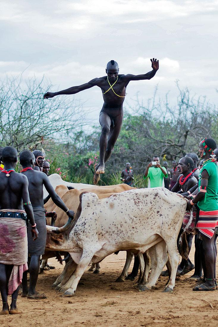 homem que salta conjunto de seis vacas durante a cerimónia de bull jumping da tribo hammer