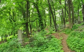 Caminho entre vegetação cerrada no cemitério de Lviv