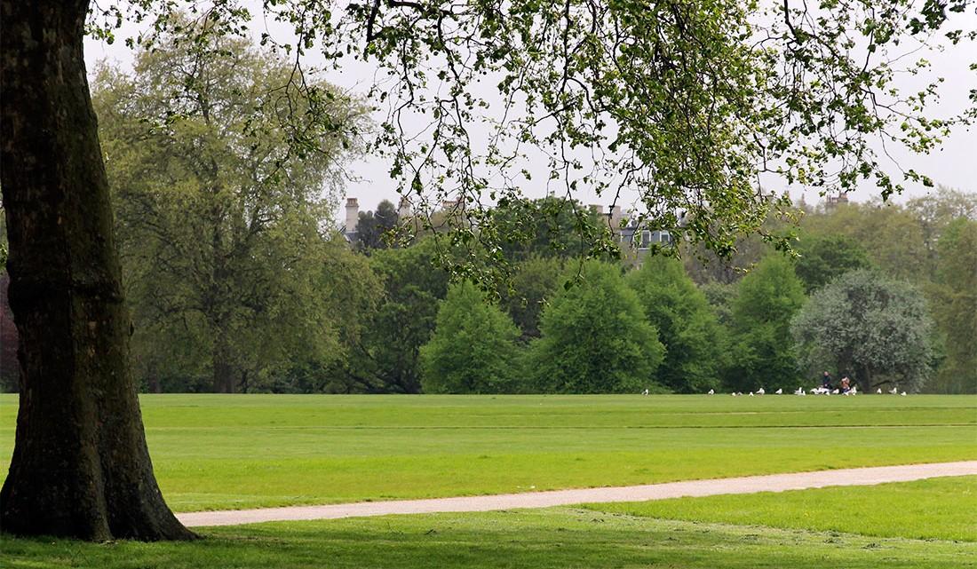 árvore e zona relvada do Hyde Park em Londres