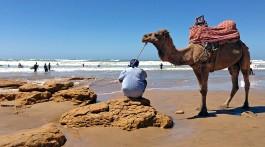 Camelo junto à água numa praia da região de Agadir em Marrocos.