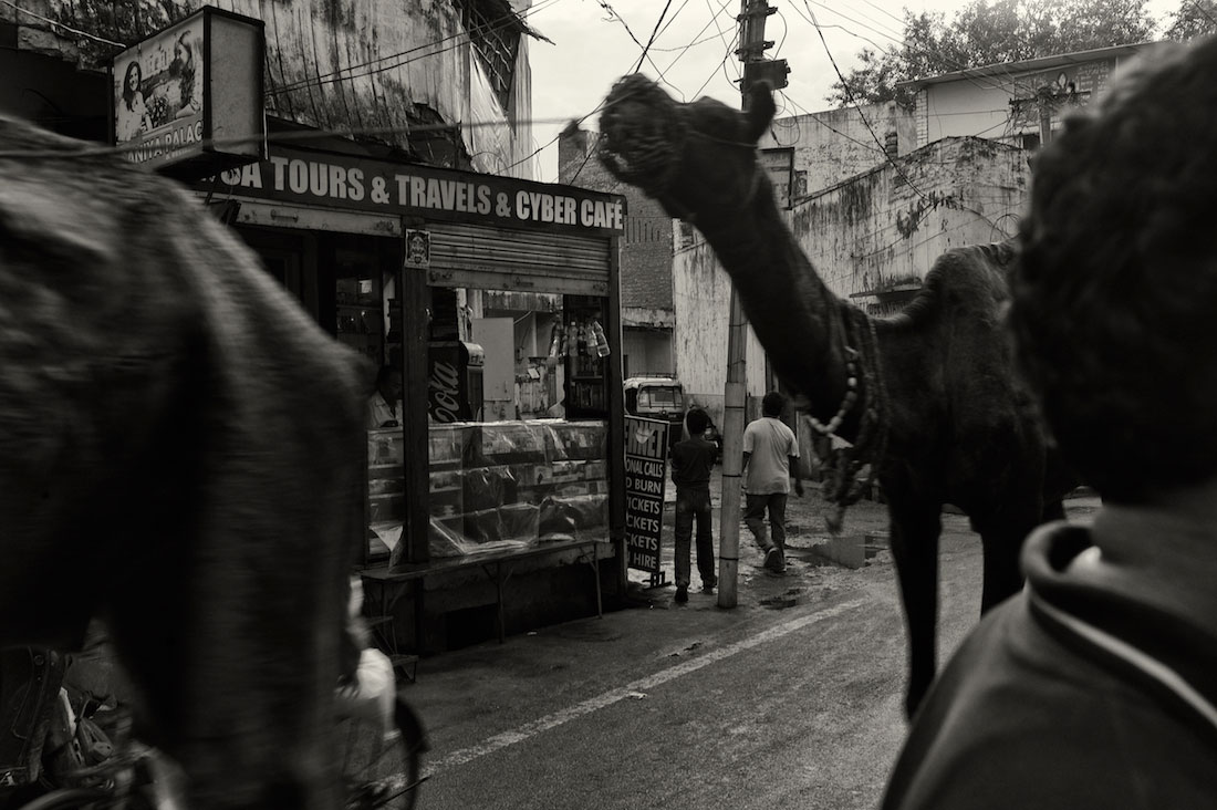 Camelos a circular numa rua de Agra na Índia.