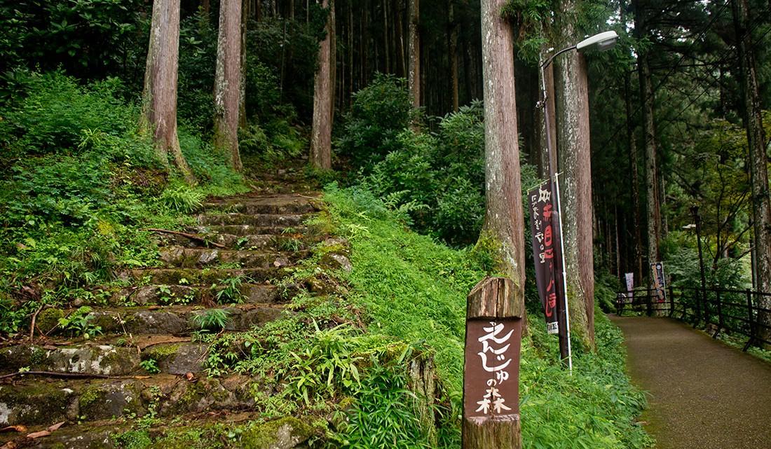 Escadas em pedra no bosque que envolve o rio akame-cho.