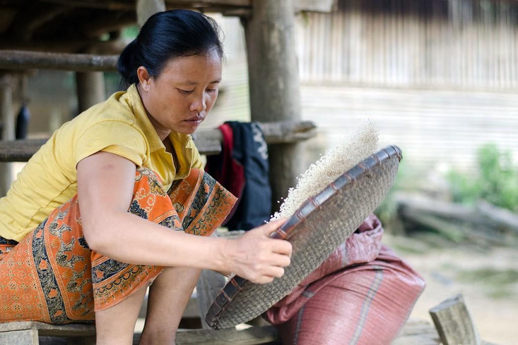 Mulher na aldeia de Muang Ngoi Neua a limpar e peneirar arroz.