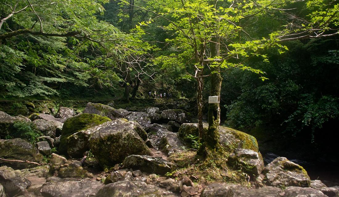 Grandes pedras e densa vegetação no parque das 48 cataratas de Akame no Japão.