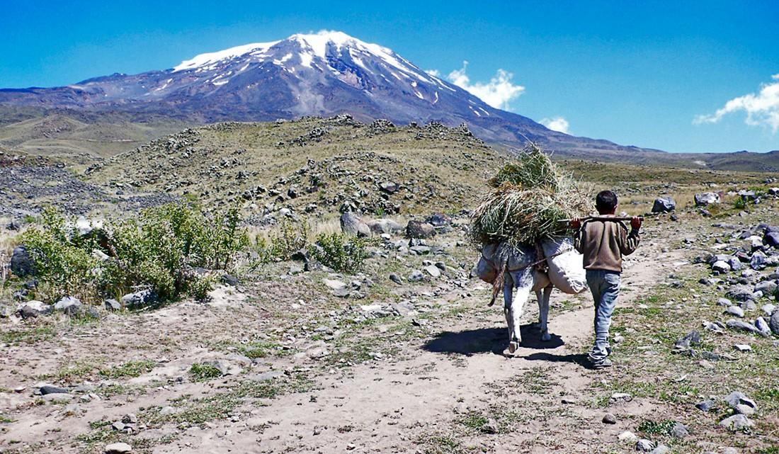 Rapaz com burro carregado de feno no monte Ararat.
