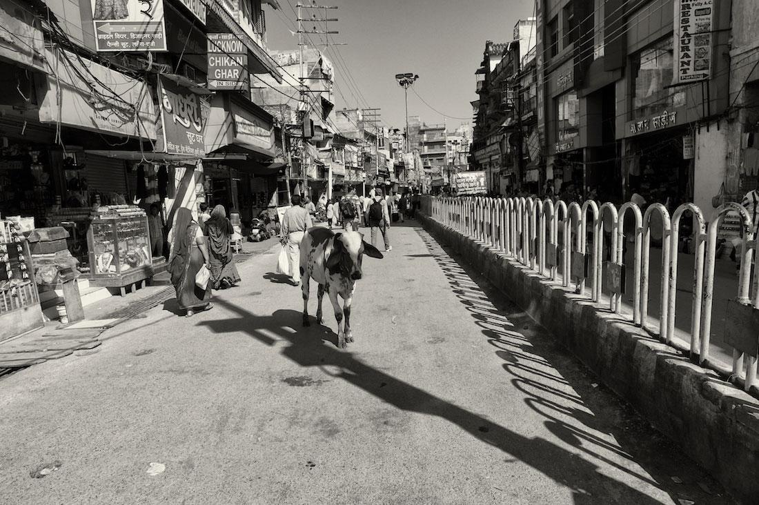 Vaca a atravessar a estrada de uma rua em Varanasi