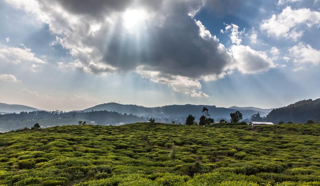 Extensos campos de chá em Nuwara Eliya com seu encoberto de nuvens.