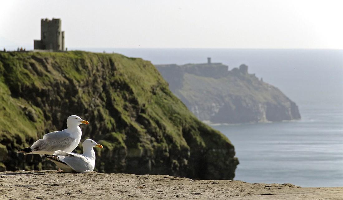 Gaivotas e castelo junto às escarpas dos Cliffs of Moher na Irlanda.