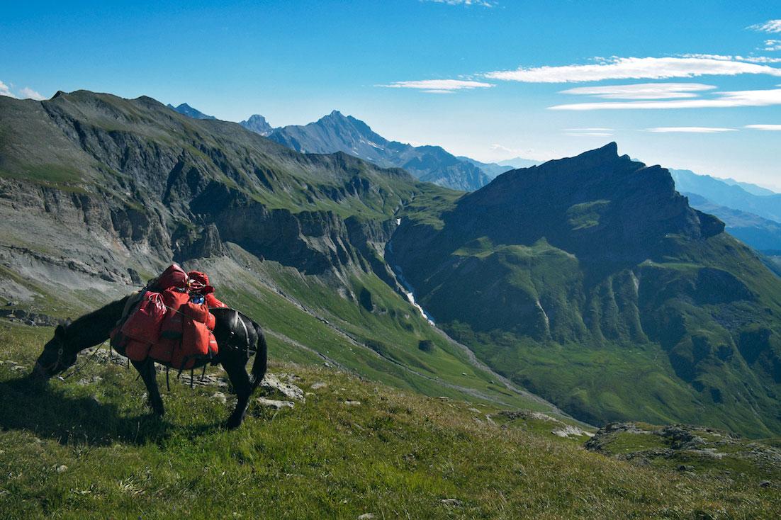 Mula de transporte para trekking a pastar nos Alpes.
