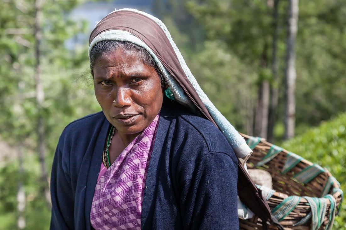 Mulher com cesto pendurando na cabeça durante a apanha de chá no Sri Lanka.