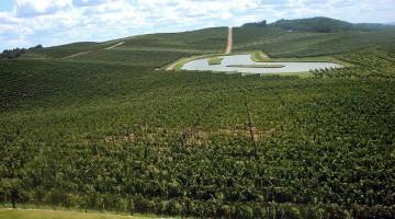 Lago no meio de grandes zonas de vinha na herdade Luiz Argenta, em plena Serra Gaúcha.