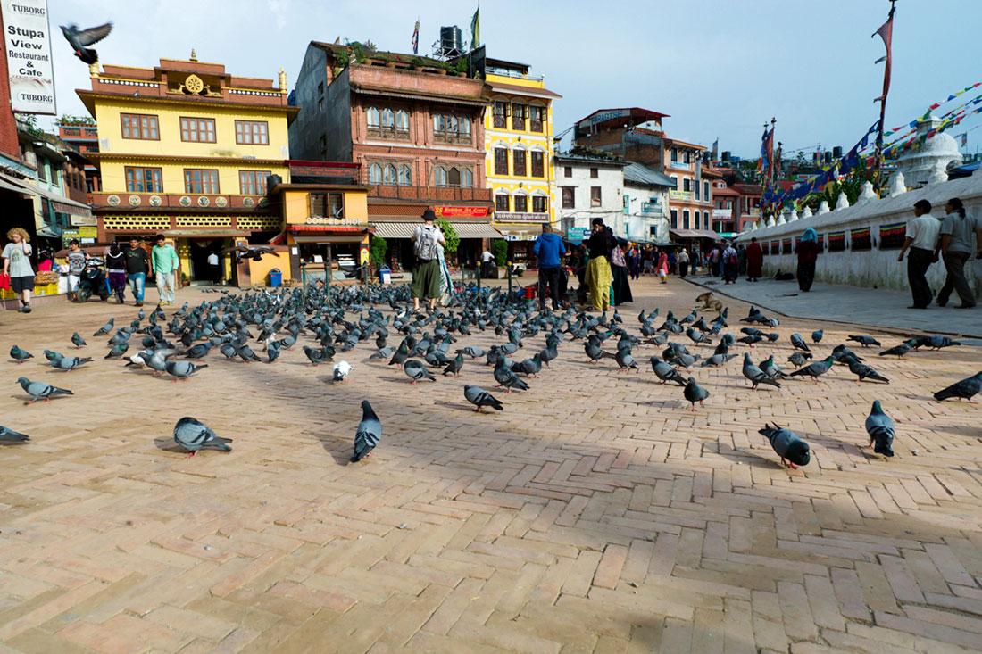 Bando de pombos na praça onde está instalada a Boudhanath Stupa em Kathmandu.