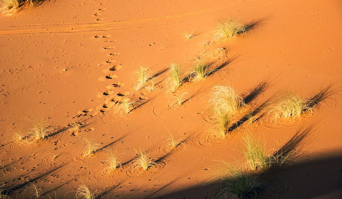 Pequenos arbustos e pegadas sobre as dunas de Erg Chebbi, em Marrocos.