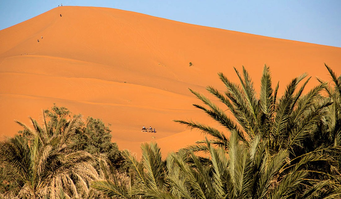 Palmeiral junto ao cordão donar de Erg Chebbi, em Marrocos.
