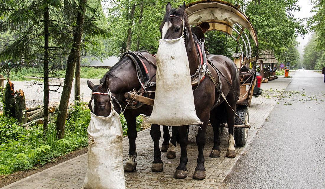 Cavalos a comer junto a carroça usada para transportar pessoas no Parque Nacional dos Tatras.