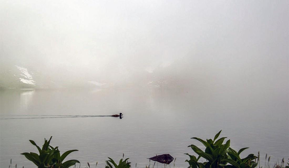 Pato a nadar sobre o espelho de água do lago czarny staw pod rysami coberto de nevoeiro.