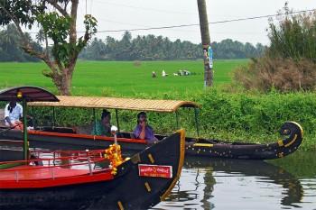 Grandes arrozais junto a um braço de água dos remansos de Alappuzha, onde estão dois barcos de transporte.